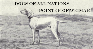 Weimar Pointer - Dogs of All Nations 1915